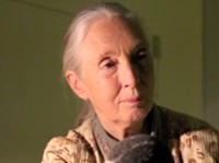 Jane Goodall and hope for the environment