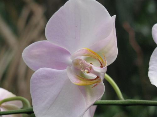 orchids_005.jpg