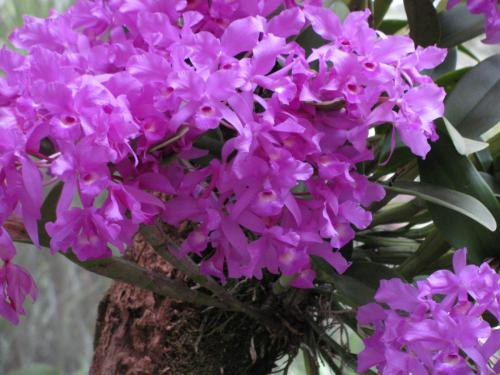 orchids_009.jpg