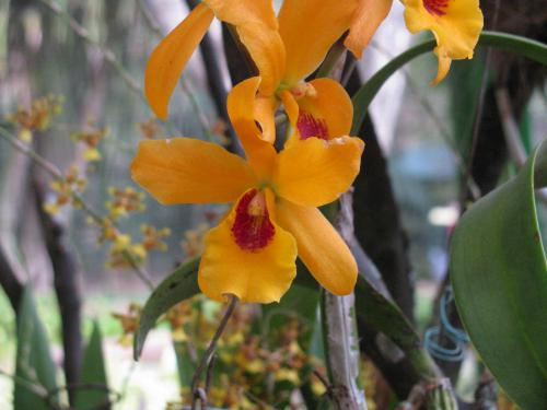 orchids_010.jpg