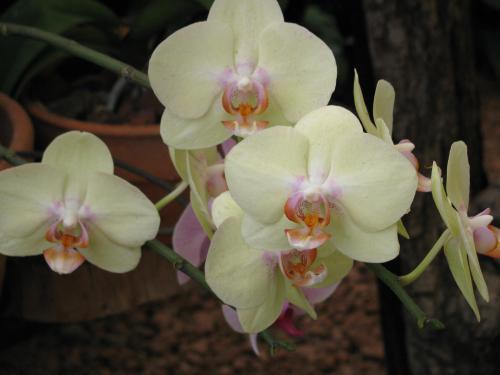 orchids_011.jpg