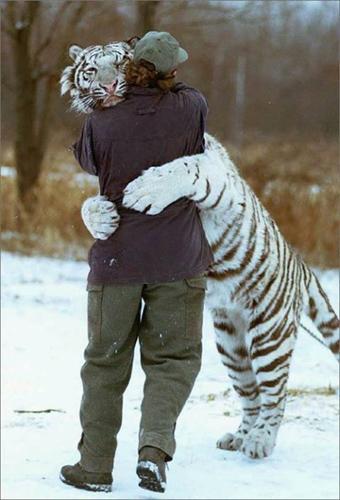 Tiger_Hug.jpg